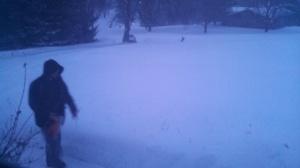 snowy jay